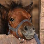 pony-700px